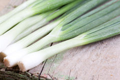 Spring onions Royalty Free Stock Photography