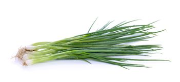 Spring onions on a white background. The spring onions on a white background Royalty Free Stock Images