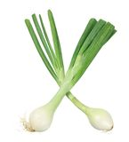 Spring Onions Stock Photo