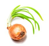 Spring onions on white background Stock Image