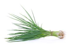 Spring onions on a white background. The spring onions on a white background Royalty Free Stock Image