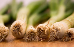 Spring Onions on Wooden Surface Royalty Free Stock Image