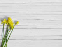 Free Spring Or Easter Styled Stock Photography With Yellow Daffodil Flowers, Narcissus. Shabby Old White Wooden Background, Flat Lay Pi Royalty Free Stock Photography - 87379017