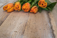 Spring orange tulips on a vintage wood background. stock images