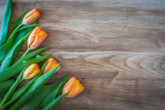 Spring orange tulips on a vintage wood background. Royalty Free Stock Photos