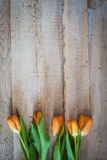 Spring orange tulips on a vintage wood background. Stock Photos