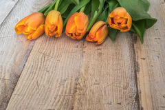 Spring orange tulips on a vintage wood background. Royalty Free Stock Photography