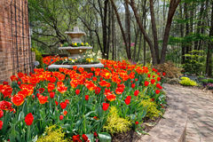 Spring Orange Tulips Virginia Stock Photo