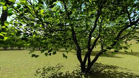 Spring orchard animation stock video