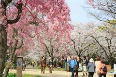 Spring in Osaka Royalty Free Stock Photo