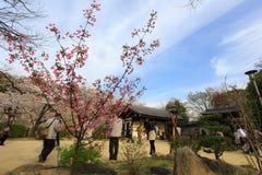 Spring in Osaka Stock Image