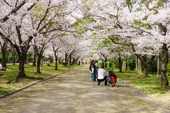 Spring in Osaka Stock Photos
