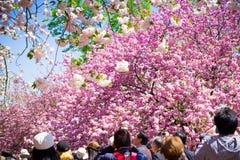 Spring at Osaka Royalty Free Stock Photography