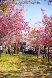 Spring at Osaka Stock Photo