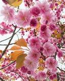 Spring in Oslo. Norwegian Flowers in Oslo royalty free stock photo