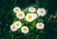 spring outdoor flower wallpaper Stock Image