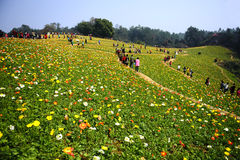 Spring outing of chinese people. In flower field Stock Photography