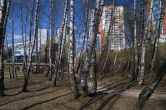 Spring on the outskirts of Moscow. Royalty Free Stock Image