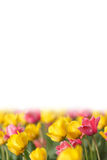 Spring page Royalty Free Stock Images