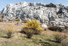 Spring Palava mountains with meadow, flowering plants, rocks and clear sky in Czech republic Royalty Free Stock Images
