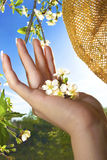 Spring in the palm of your hand. The flowering of fruit berry tree in the women's hands in the spring when the weather is Sunny stock image