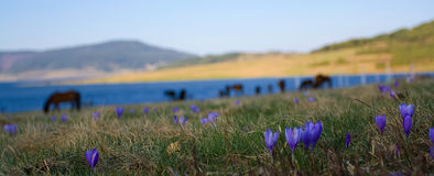 Spring panorama Royalty Free Stock Images