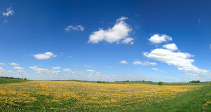 Spring panorama 2. Panorama Lithuanian rural areas with blue sky and dandelion field Stock Images