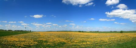 Spring panorama. Panorama Lithuanian rural areas with blue sky and dandelion field Royalty Free Stock Image