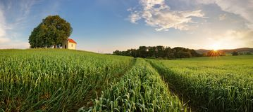 Spring panorama countryside landscape with wheat field Royalty Free Stock Photos