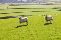 Spring panorama of Isle of Man Royalty Free Stock Images