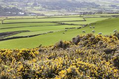 Spring panorama of Isle of Man Stock Images