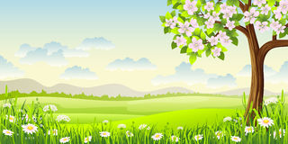 Spring panorama landscape Stock Image