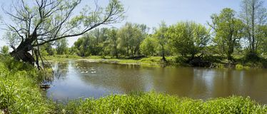 Spring panorama of river and trees Stock Images