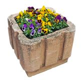 Spring Pansies bloom in a street concrete flowerpot isolated. Spring Pansies bloom in a street concrete flowerpot. Isolated on white with patch stock photo
