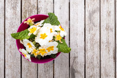 Spring Pansies on Table Royalty Free Stock Images
