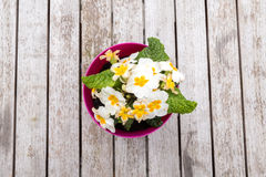Spring Pansies on Table Stock Photography