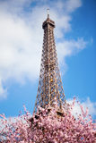 Spring in Paris Royalty Free Stock Photography