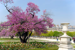 Spring in Paris Royalty Free Stock Photo