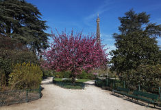 Spring in Paris. Image during the spring, of the Eiffel Tower from a beautiful park in the vicinity Stock Images
