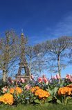 Spring in Paris. Image of the famous Eiffel Tower seen from a flower garden, behind some bare trees in spring royalty free stock photography