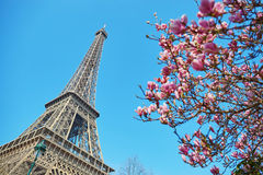 Spring in Paris Royalty Free Stock Photos