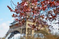 Spring in Paris Stock Photos