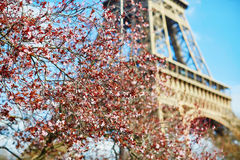 Spring in Paris Stock Photography