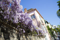Spring in Paris. Montmartre, blossom Royalty Free Stock Image
