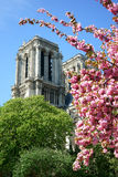 Spring in Paris Stock Images