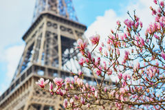 Spring in Paris Royalty Free Stock Image