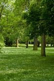 Spring park. Spring fresh green park with trees Stock Photo