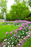 Spring in the park Stock Image