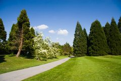 Spring Park. Trees in the park, on a bright spring day royalty free stock photo