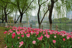 Spring park stock photography